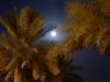 Mond mit Palmen